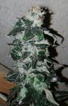 D2Harvest_compress30.jpg