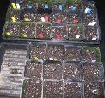 bdm seedlings 7_8.jpg