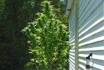 Plant (2).jpg